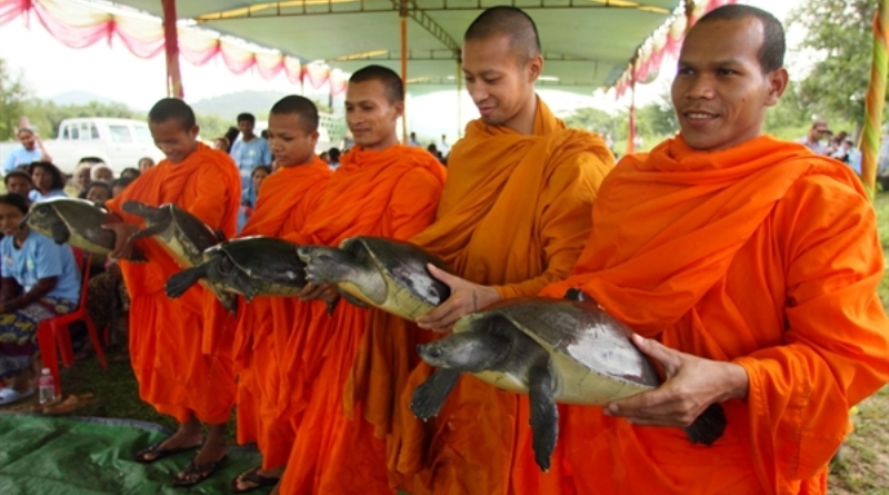 monges-com-tartarugas-reais-camboja