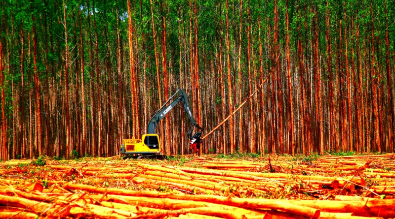 desmatamento-floresta-emissão-gases-de-efeito-estufa