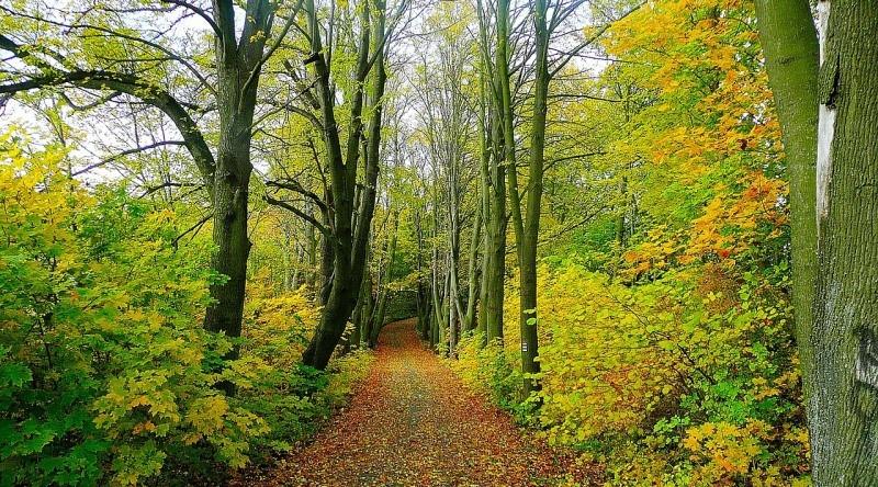caminho cheio de árvores