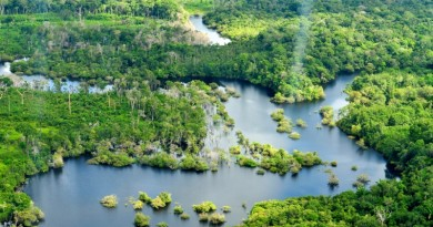 vista aérea da Floresta Amazônica