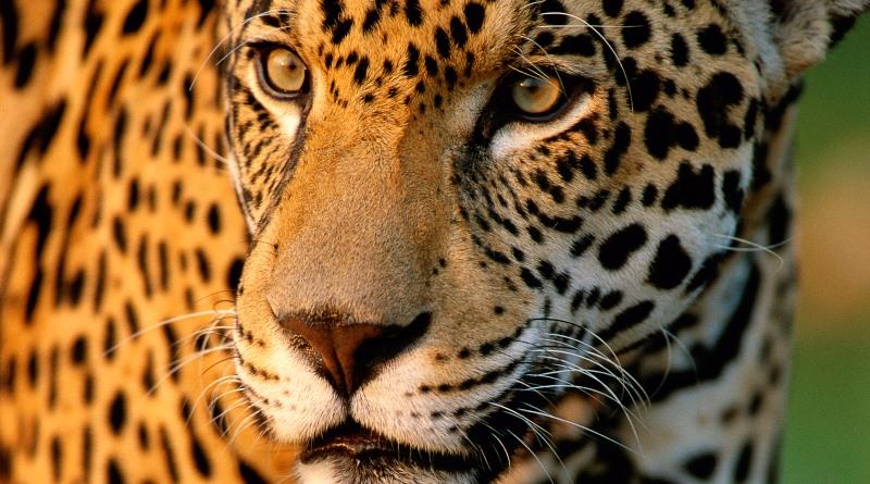 Amado A riqueza da fauna e flora do Cerrado sob ameaça - Conexão Planeta JF28