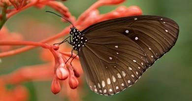 borboleta curso fapesp biodiversidade