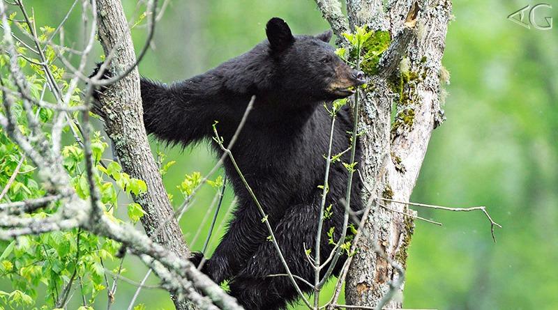 meu-primeiro-urso-adriano-gambarini