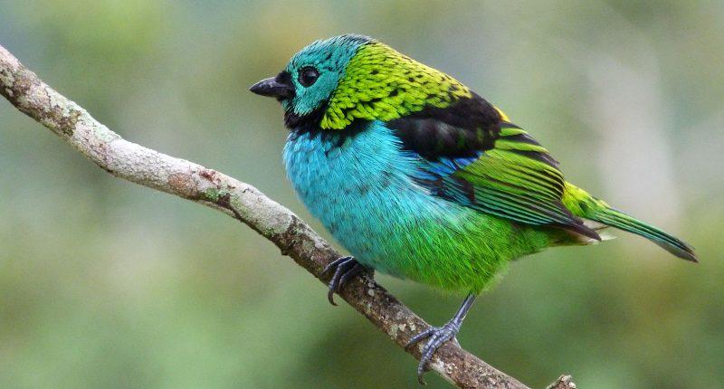 Favoritos 76 árvores brasileiras que atraem aves - Conexão Planeta BB29