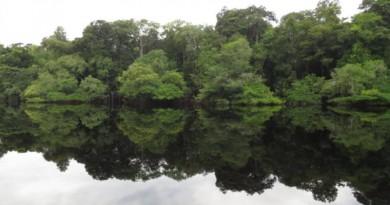 Floresta ao longo do Rio Jaú, no Parque Nacional do Jaú, uma das maiores unidade de conservação brasileiras, localizada nos estados do Amazonas e de Roraima, com 2,36 milhões de hectares