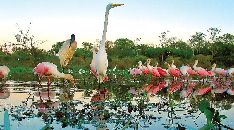 aves fotografas no Pantanal
