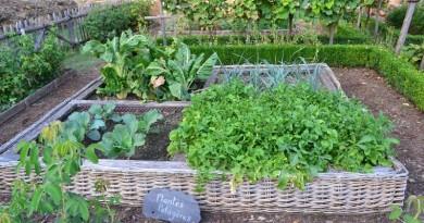 horta com plantas e ervas