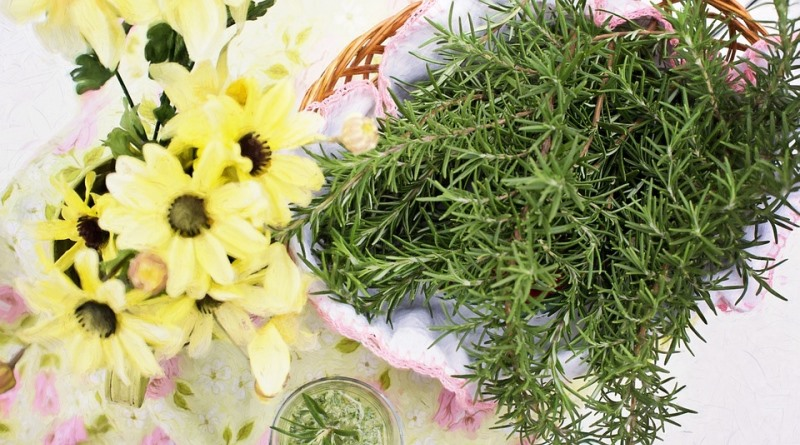 alecrim é uma das ervas aromáticas