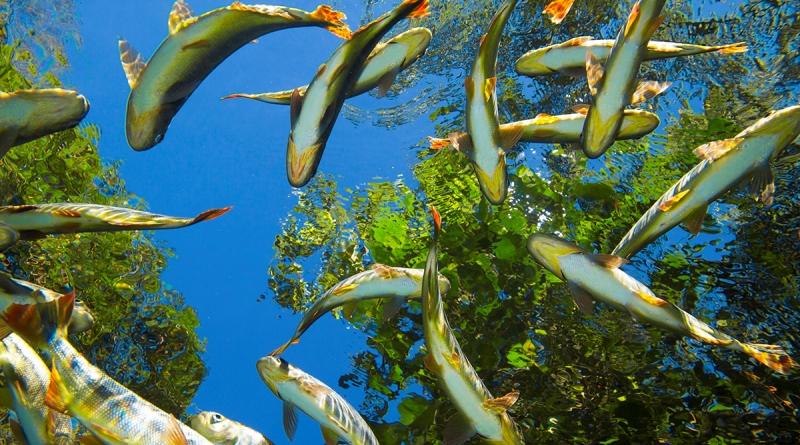 vários tipos de peixe nadando