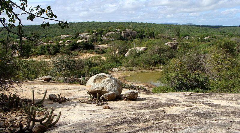 Biomas ameaçados: paisagem da caatinga paraibana