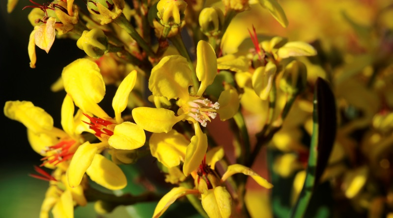 flor encontrada na expedição às montanhas da Floresta Amazônica