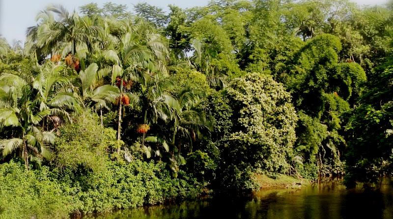 floresta-regenerada-capoeira-esponja-de-carbono--800