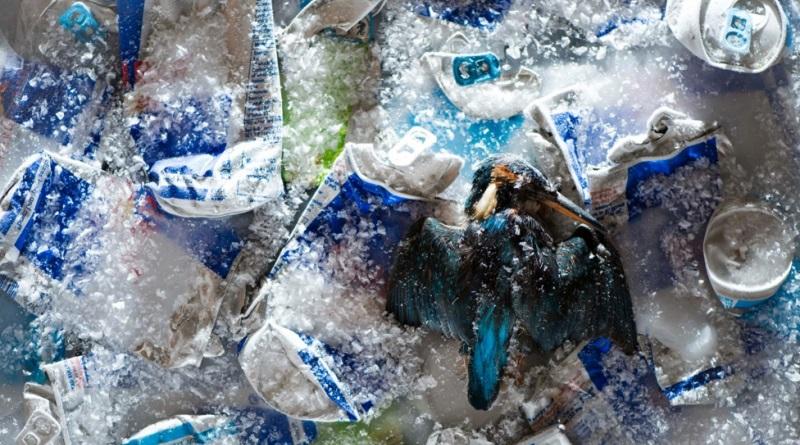 fotos-lixo-meio-ambiente-4-800