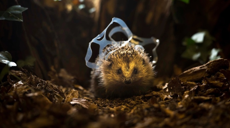 Em foco: o impacto do lixo sobre a vida selvagem
