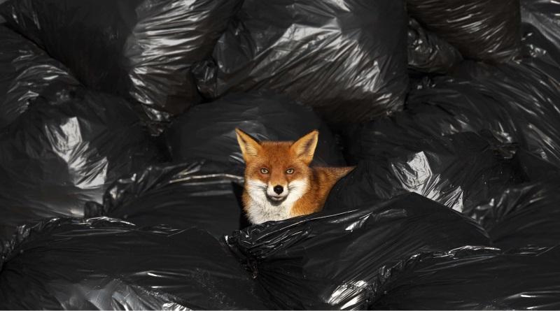 fotos-lixo-meio-ambiente-8-800