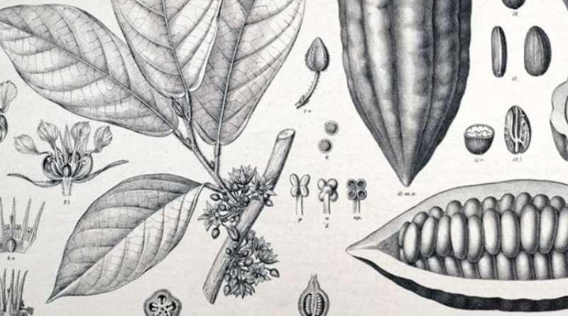 como-aprender-a-identificar-arvores-e-plantas
