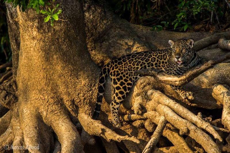 experiencia-fotografica-pantanal-marcos amend-2x