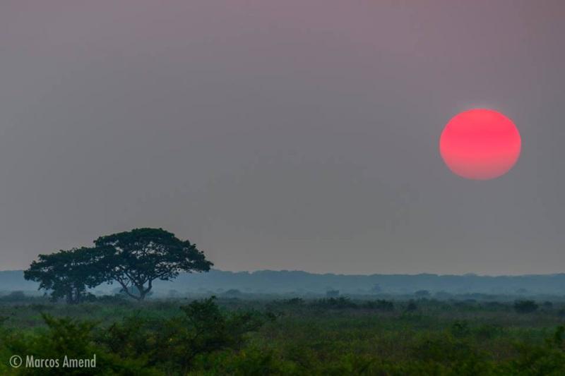 experiencia-fotografica-pantanal-marcos-amend-3x
