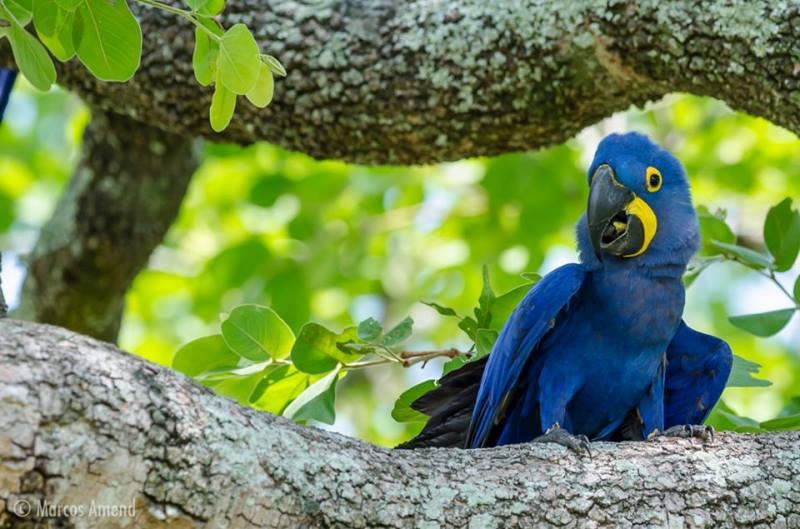 experiencia-fotografica-pantanal-marcos amend-4x