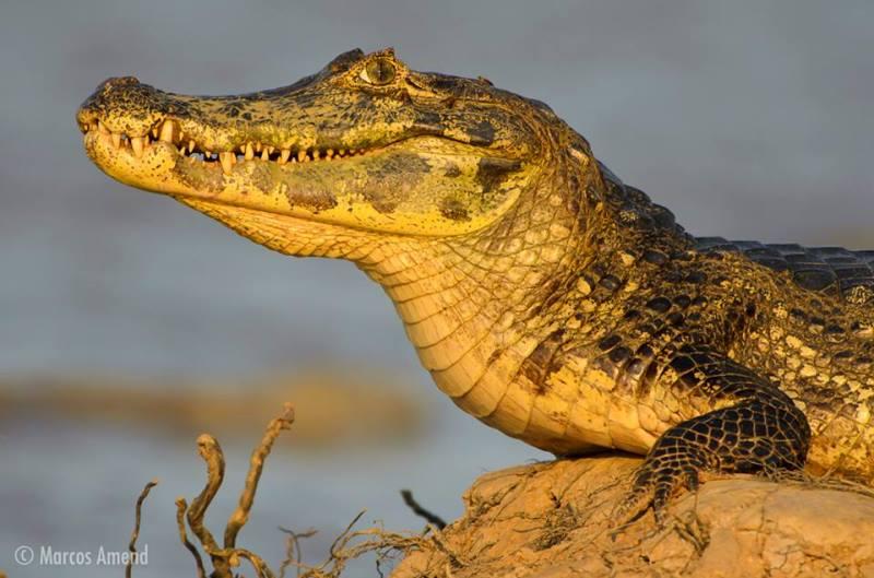 experiencia-fotografica-pantanal-marcos-amend-800