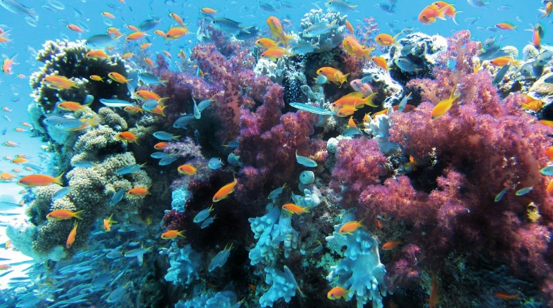 pesquisadores-restauram-corais-australia-800