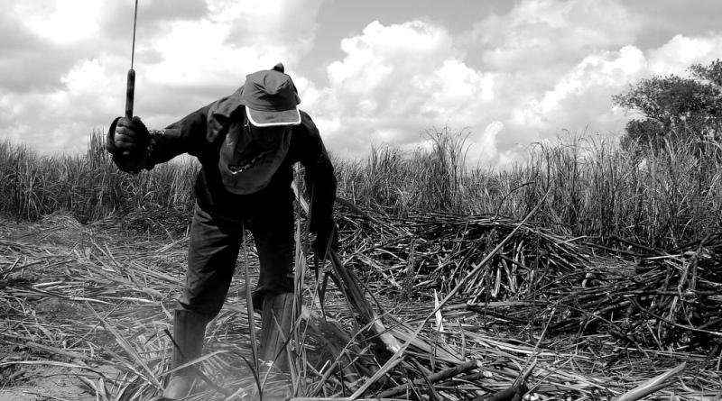 trabalho em condição análoga à escravidão