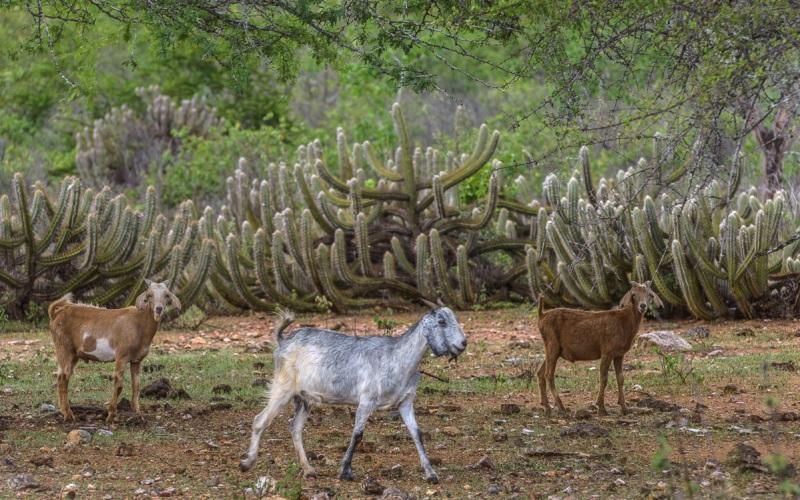 Caatinga Em Imagens O Bioma Mais Vulner 225 Vel E