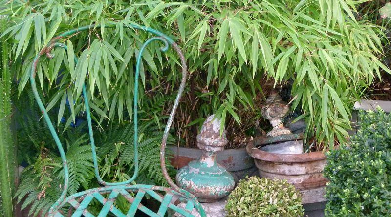 folhagens: bambu anão