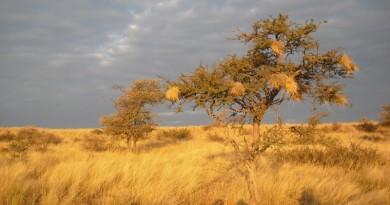 seca causada pelas mudanças climáticas