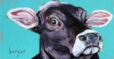 concurso animal não é comida