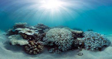 branqueamos de corais nas Ilhas Maldivas