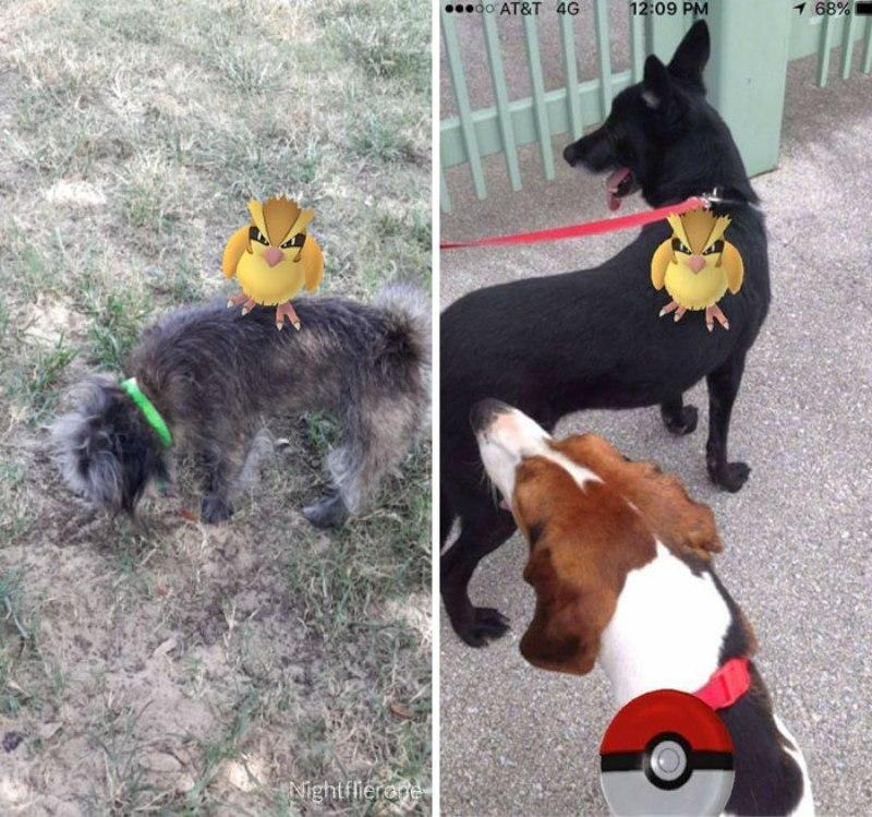 pokemon-go-jogador-cachorro6