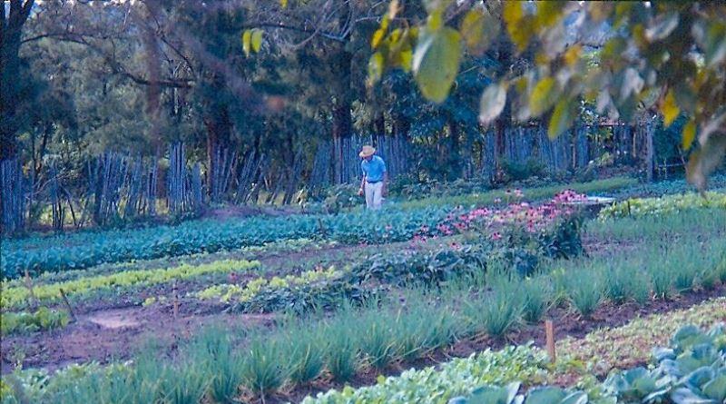 reflorestamento-rural-800