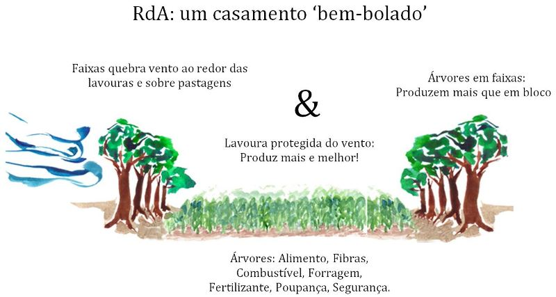 reflorestamento-rural-ilustracao-800