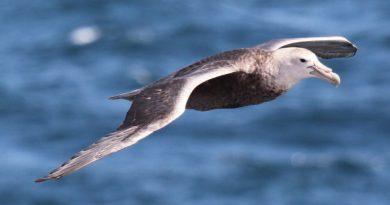 agrotóxicos ameaçam aves da antártica