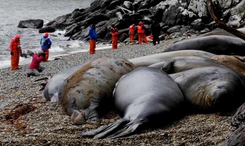 expedicao-fotografica-fiordes-da-patagonia-antonio-jimenez-4-800