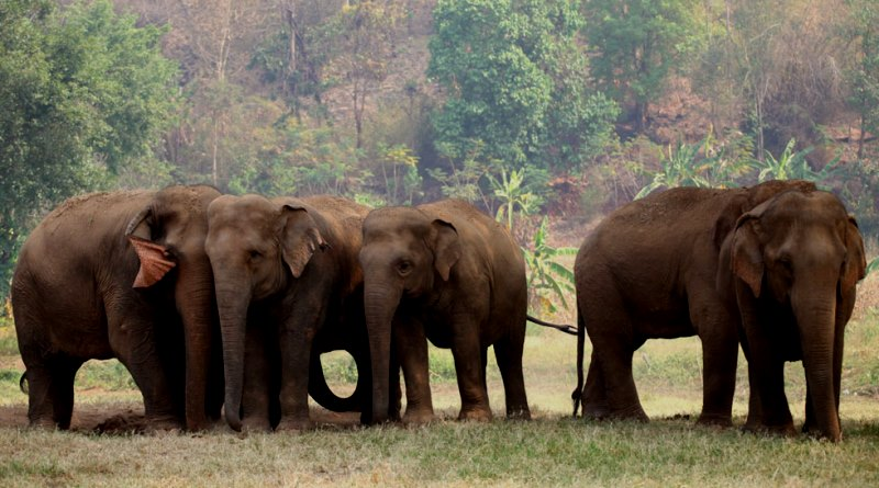global_sanctuary_for_elephants-divulgacao
