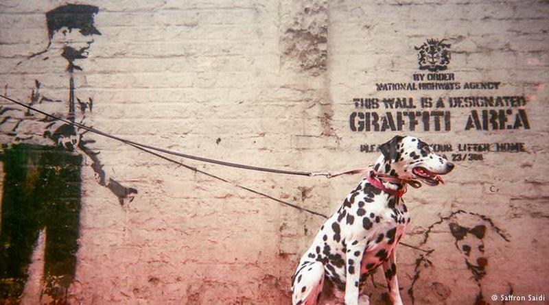 banksys-dalmatian-jpg