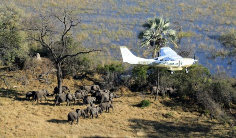 populacao-elefantes-africa-reduzida-aviao-800