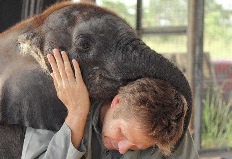 populacao-elefantes-africa-reduzida-filhote-800