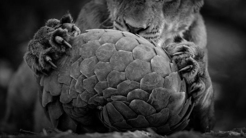 wildlife-photographer-3-800