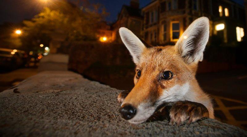 wildlife-photographer-800