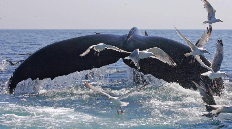 Obama cria primeira reserva nacional de proteção marinha no Oceano Atlântico