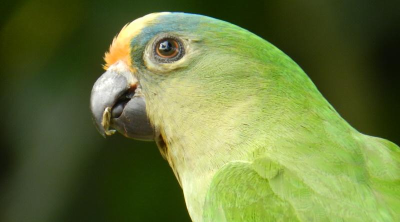 WWF abre inscrições para bolsa de estudos sobre conservação da natureza