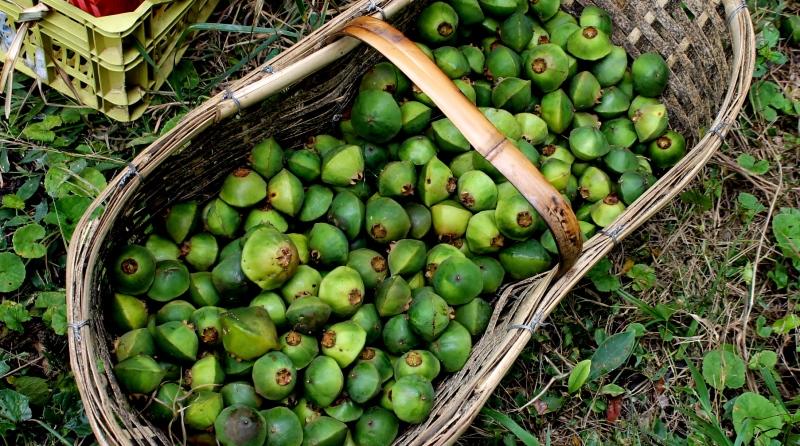 frutas-nativas-cinturao-verde-sp