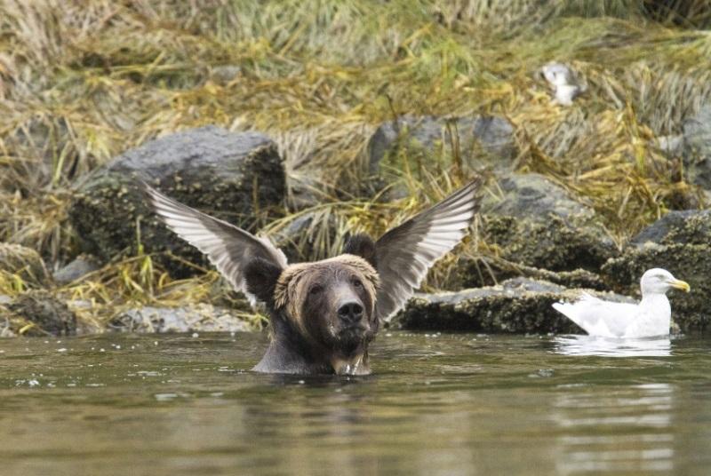 comedy-wildlife-photographer-10-conexao-planeta