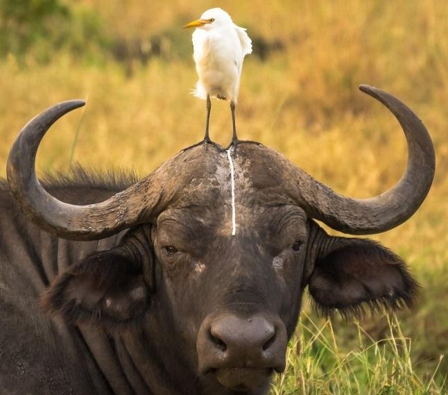 comedy-wildlife-photographer-3-conexao-planeta
