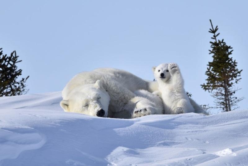 comedy-wildlife-photographer-6-conexao-planeta