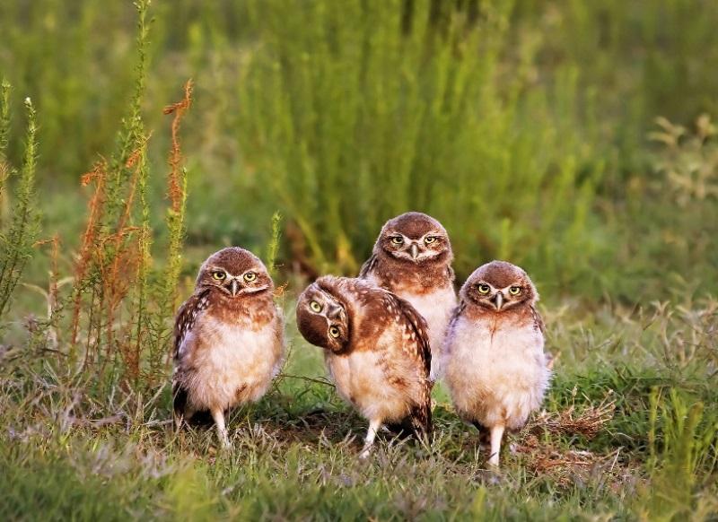 comedy-wildlife-photographer-7-conexao-planeta