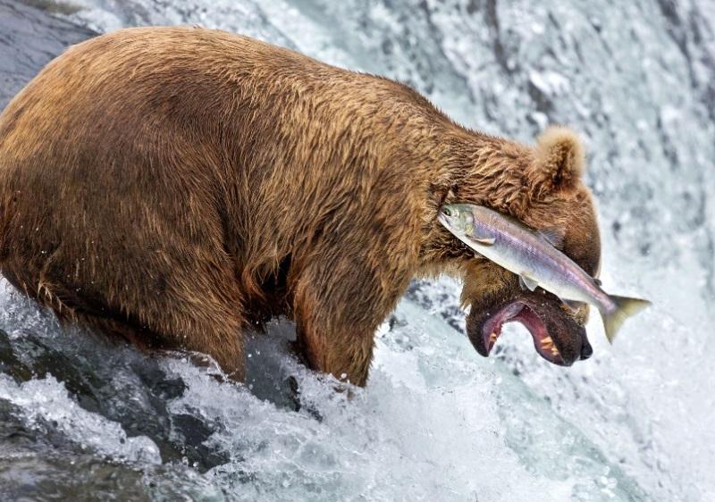 comedy-wildlife-photographer-8-conexao-planeta
